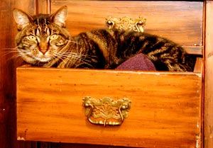 spoo in the drawer